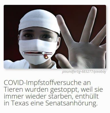 COVID-Impfstoffversuche an Tieren wurden gestoppt, weil sie immer wieder starben, enthüllt in Texas eine Senatsanhörung