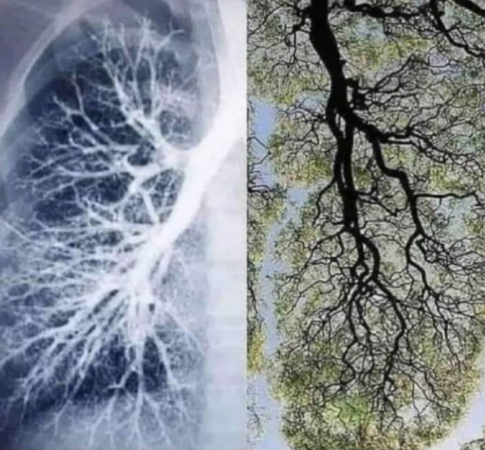 SAUERSTOFF und CO2